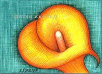 Yellow/orange Calla Lily