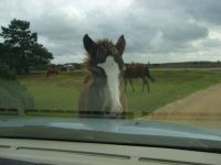 will you please get your nose off my bonnet