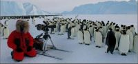 THEME The Majestic Earth:- Emperor Penguins