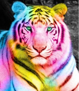 the tiger of many colors!!!!!