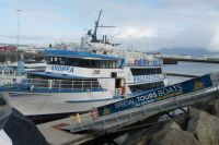 Iceland, whale watching trip
