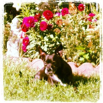 Ringo in the Garden