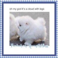 cloud puppy