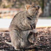 Australia's Quakka with baby