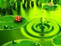 Ladybug on green