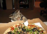 Cat Nabs Pizza