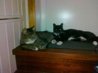 More cats... Ami and Miss