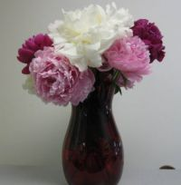 Peonies for my birthday