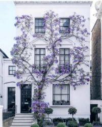 Purple in London