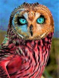 Owl do it if you'll do it.
