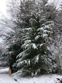 A Rare White Christmas
