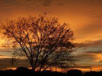 Beautiful tree, Beautiful sunset