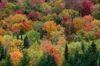 Autumn-Trees-4