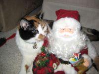 Merry Christmas with Santa and Taz