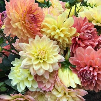 fresh flowers.jpg2