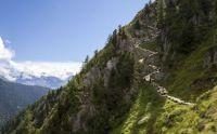 alpine-sheep-path