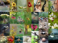 animals01_63
