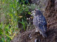 I spy with my Owl Eye