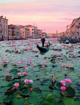 Blooming Canals of Venice