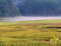 marsh palette--challenging