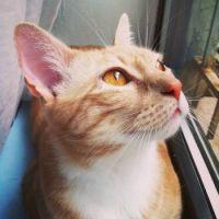 Finn birdwatching