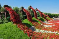 flower flow at Dubai Miracle Garden