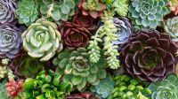succulentsb