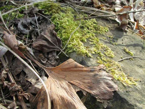 Old dried leaves and moss