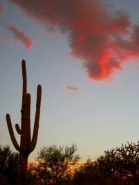 Saguaro Sunset Pre-Storm