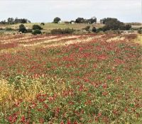 Fields of Red, Green And Gold