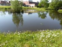 Winterswijk. Pond. In the background is the hospital.