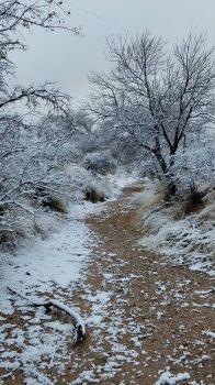 Snowy Creek Bed Pearce, AZ