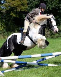 puzzle show jumping