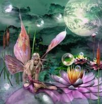 lillypad dreams