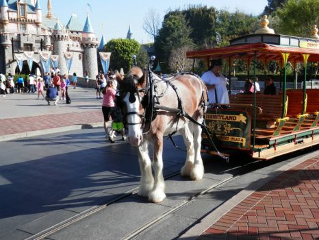 Horse pulling trolley