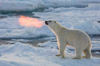 Polar dragon offspring?