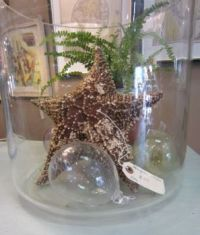 Starfish Glass Jar
