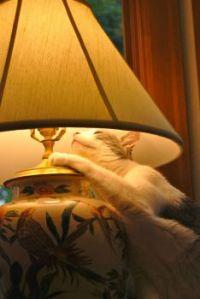 Rebob worships his favorite lamp