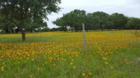 Hill Country Bloom