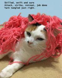 Cody  VS  Grandma's yarn