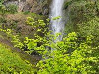 One of Oregon's waterfalls