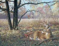 Hold Tight-Whitetail Deer by Jim Kasper