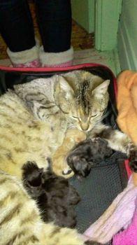 Rescue Cat Family