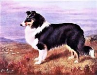 The Collie (1911)