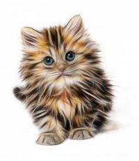 gatito 3D
