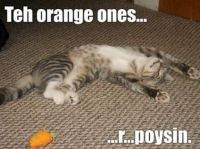 Don't eat the orange colored toy mice!