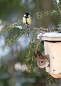 Great tit welcomes squirrel to it's home... :-)