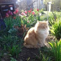 Max has been guarding the tulips since morning ☺