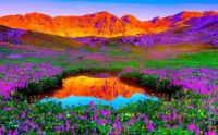 Colorful Mountain and Flowers for your New Year.