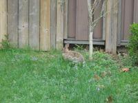 My Bunny awaiting some food